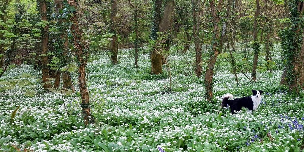 Cornwall Im Fruhling Blumen Events Und Seehundbabys Unterwegs