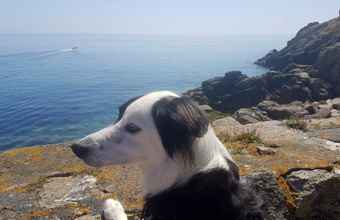 boris in lamorna